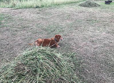 公園 芝刈り 画像  犬