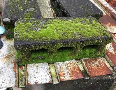 ブロック塀 苔蒸しまくり