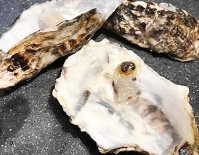 牡蠣の中 蟹 カクレガニ