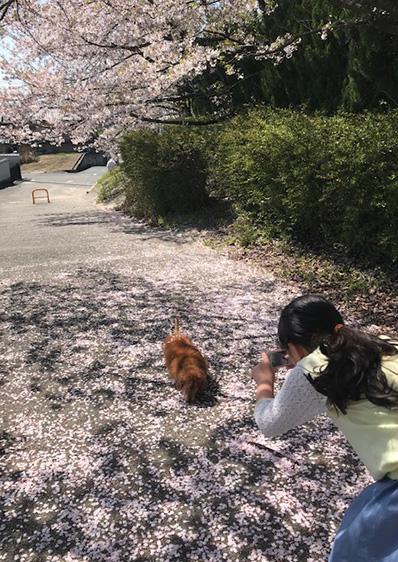 犬とお花見