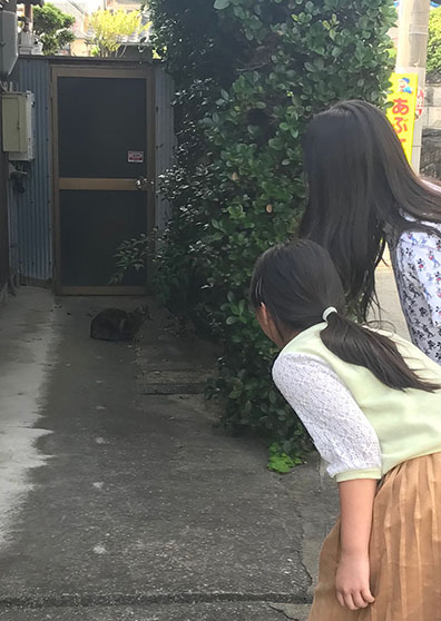 野良猫 ノラ猫 のら猫 大阪