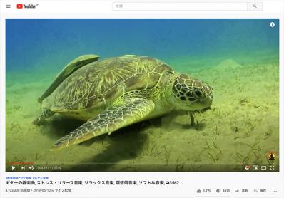 海ガメ 小判鮫 コバンザメ