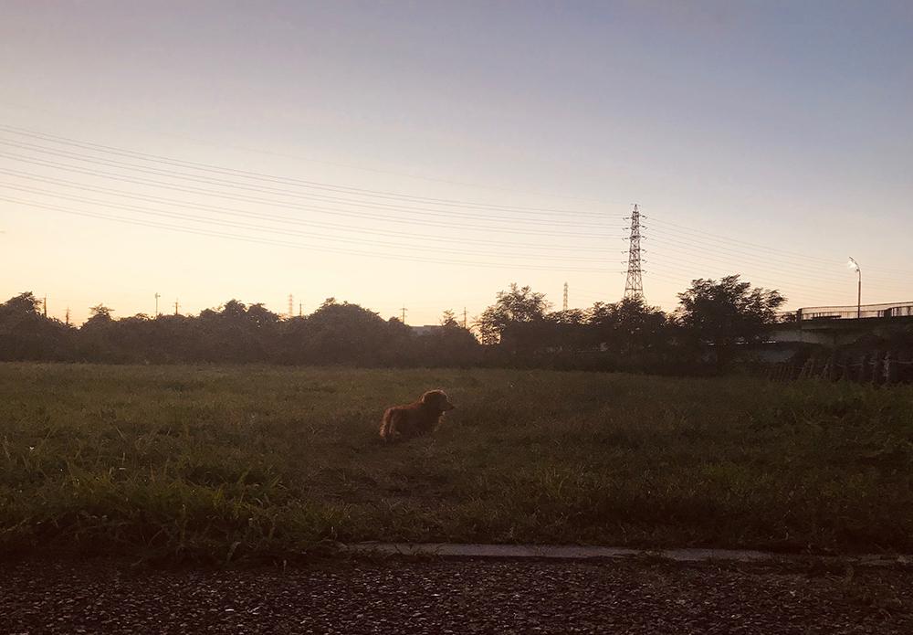 夕暮れ 散歩