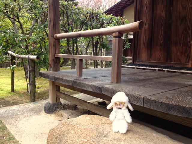 chicchi_daisen3.JPG