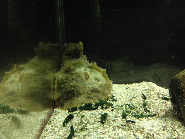 ウミウシ ウミウシminimini水族館
