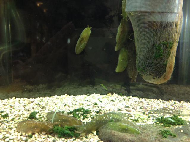 天保山 ウミウシ ウミウシminimini水族館