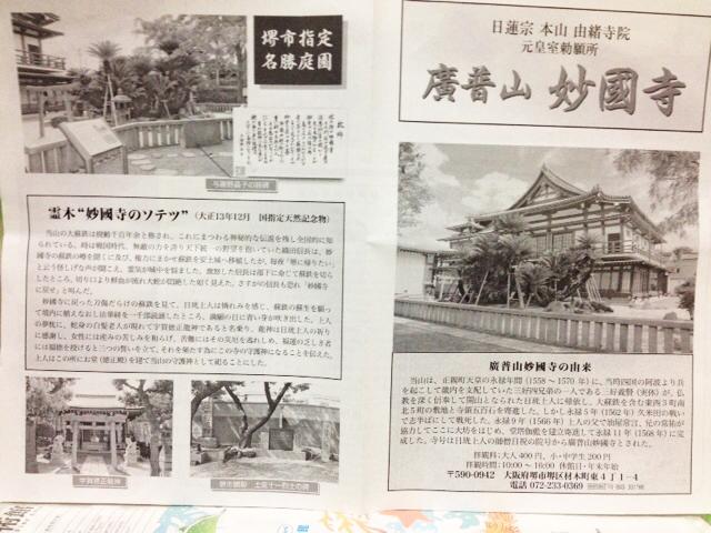 妙国寺 妙國寺 堺市指定名勝庭園 ソテツ 蘇鉄