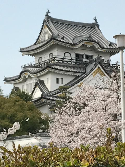 岸和田城 お花見 桜 サクラ