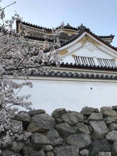 岸和田城 天守閣 お花見 桜