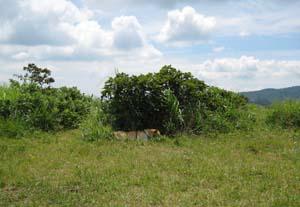 ここをもう少し広げて・・・ここの草は邪魔で・・・と、作業中のアイン
