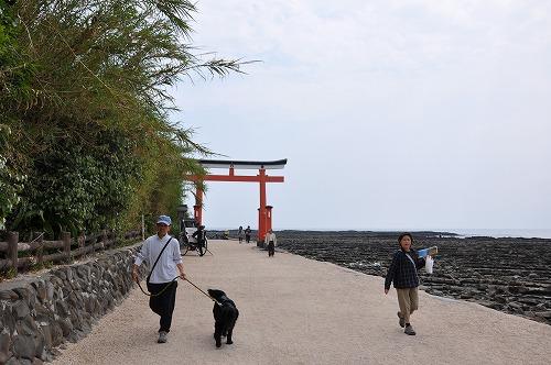 青島神社_13