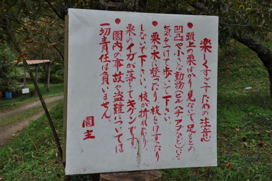 須木栗_09