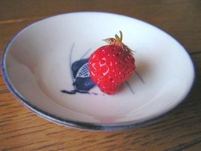 ベランダ産イチゴ