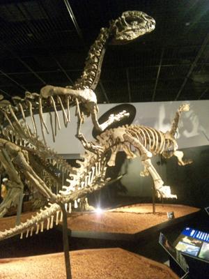 恐竜博物館1