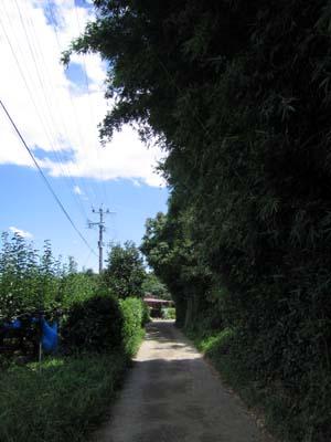 梨畑の横の道