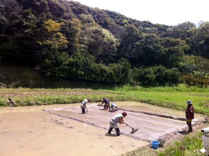 水苗代の床作り