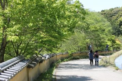 新緑 室町塀.JPG