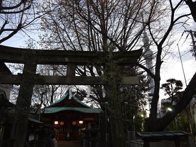 秋葉神社とツリー
