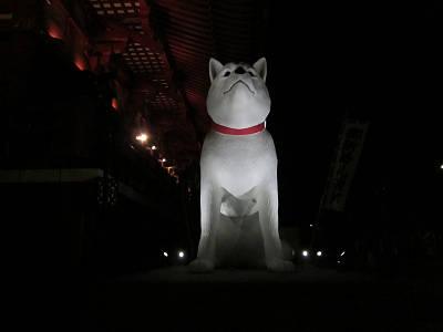 浅草寺のイヌ2