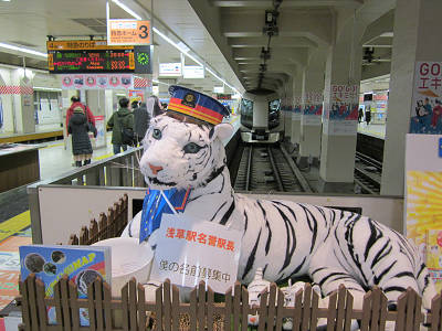 浅草駅の白トラ