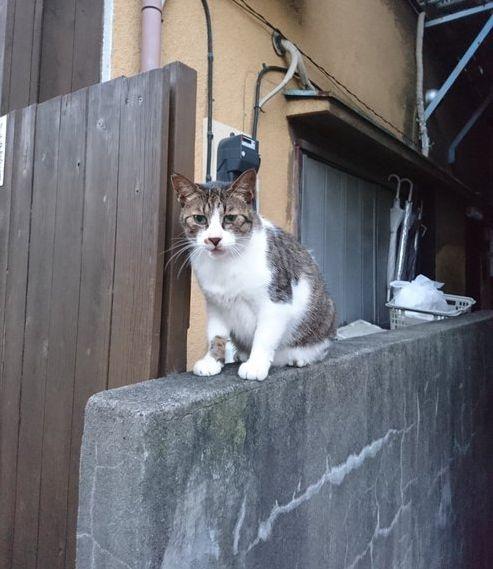 塀の上ネコ