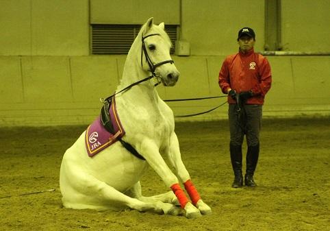 実践競走馬学を受講して。 | 南...