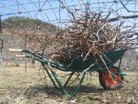 剪定枝を一輪車に積む