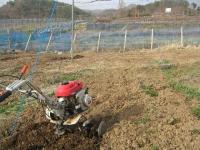 葡萄園に新しい苗を植えつける