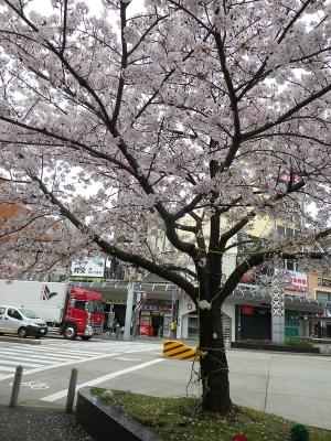 春の散歩2