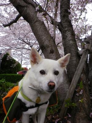 春の散歩4