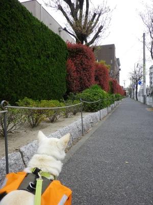 春の散歩5