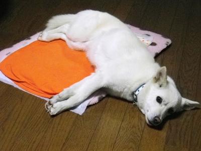 横寝マーちゃん