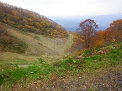 スキー場の紅葉