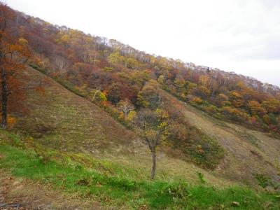 スキー場の紅葉2