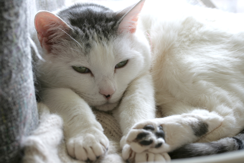 サラ、手を伸ばして寝る