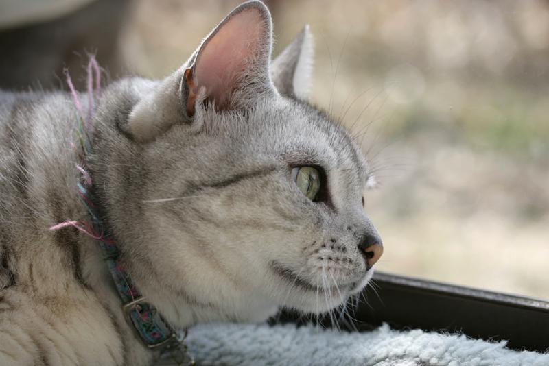 メヌ、外を眺める