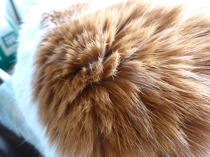 八ヶ岳に暮らす猫、カノンさまのメロンパン