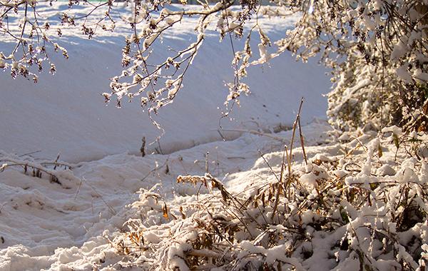 八ヶ岳南麓雪もよう