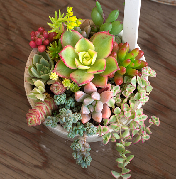 花遊びさん、多肉植物