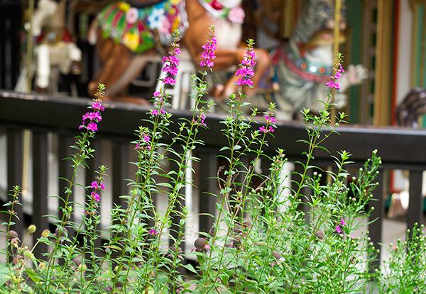 萌木の村、ポール・スミザーのガーデニング、メリーゴーラウンドカフェ