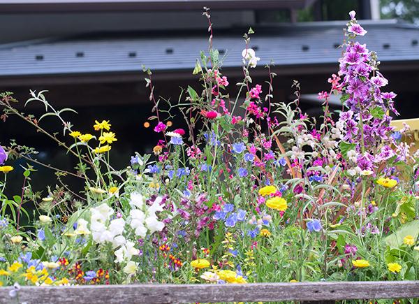 rock 店の前の花、花