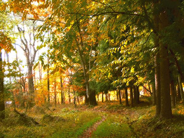 八ヶ岳南麓 秋の林の風景