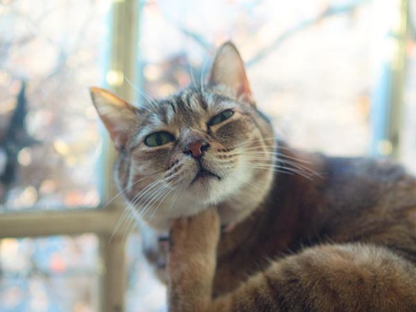 ちゅじゅ ペンションメルヘンの猫