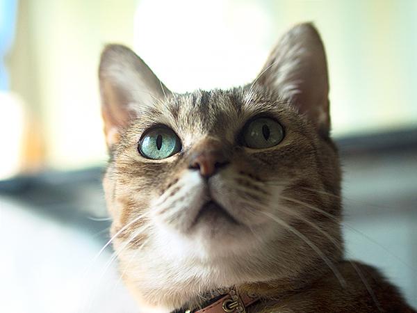 ちゅじゅ ペンションメルヘン 八ヶ岳 の猫