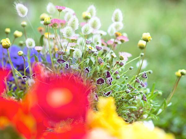 八ヶ岳花遊び とし子さんの寄せ植え