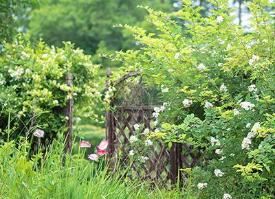400-290 風景 自分の家の庭