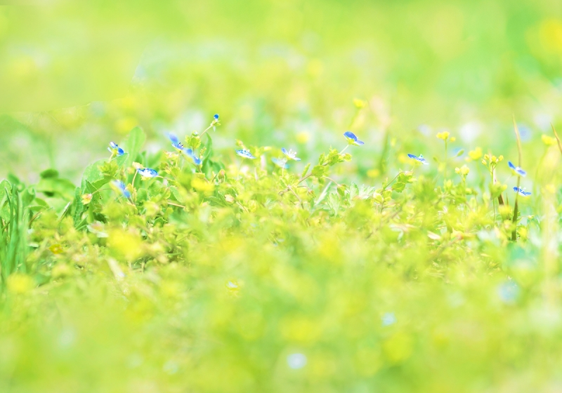 春の三色織
