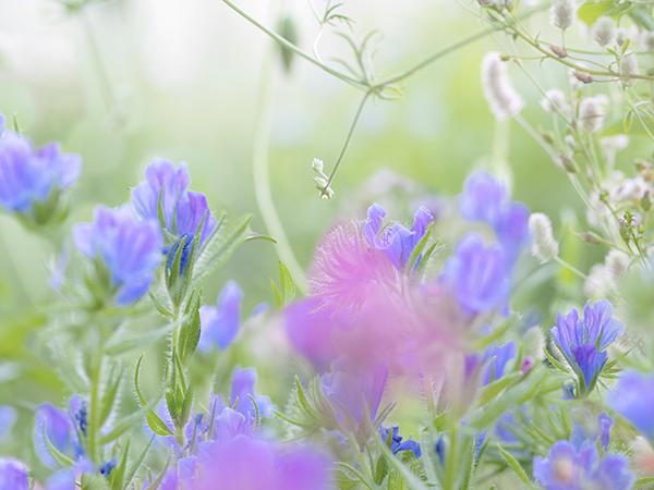 八ヶ岳花遊びさんの花畑