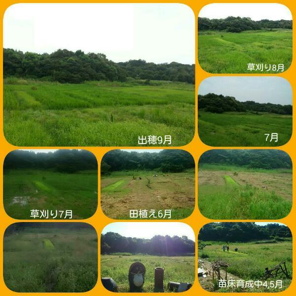2015-09-03_20.49.55_1.JPG