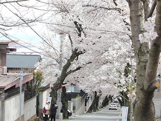 手作り雑貨・セレクト雑貨 エクリュ ecru 桜2014